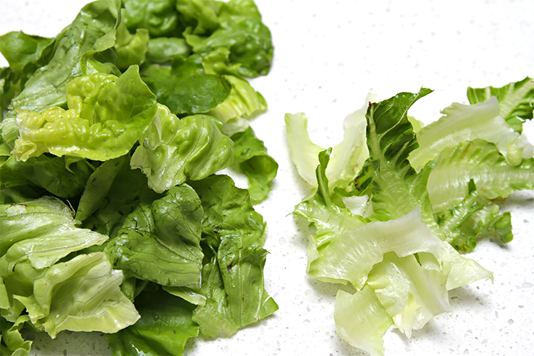 Torn Boston lettuce