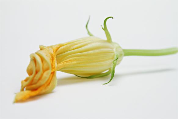 Zuchini flower - Squash blossom
