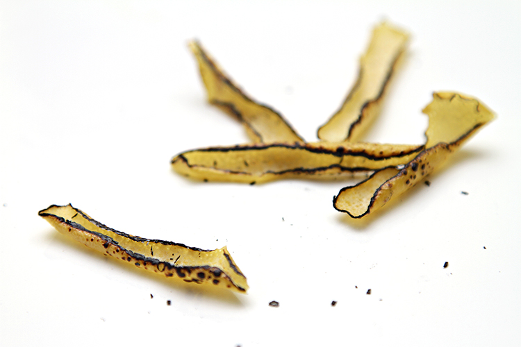 Burnt lemon peels