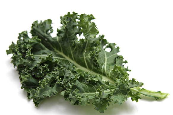 Curly kale leaf
