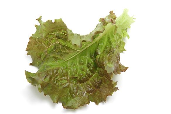 Lola Rosa-lettuce leaf